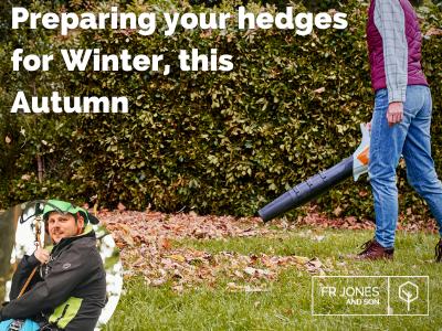 Winter hedge care this Autumn
